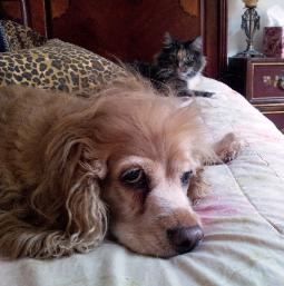 both cats and dogs can benefit from the right redirection at times